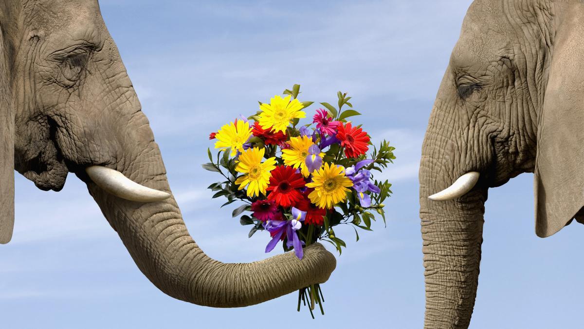Дарим цветы