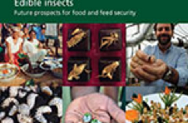 research paper on insects Research supported by grants from sweden's sjfr (skogs- och jordbrukets forskningsråd = forest and agricultural research council.